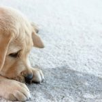 4 Steps To Protecting Your Carpet From Dog Urine